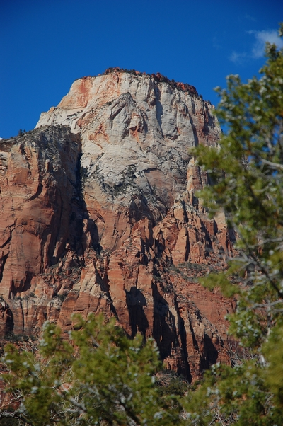 Zion Day Tours