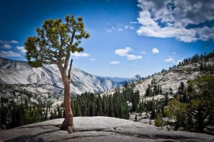 High Country Yosemite Rosales Photography 2014