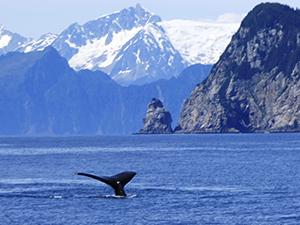 alaska6 - Alaska Kenai Adventure 9 Days