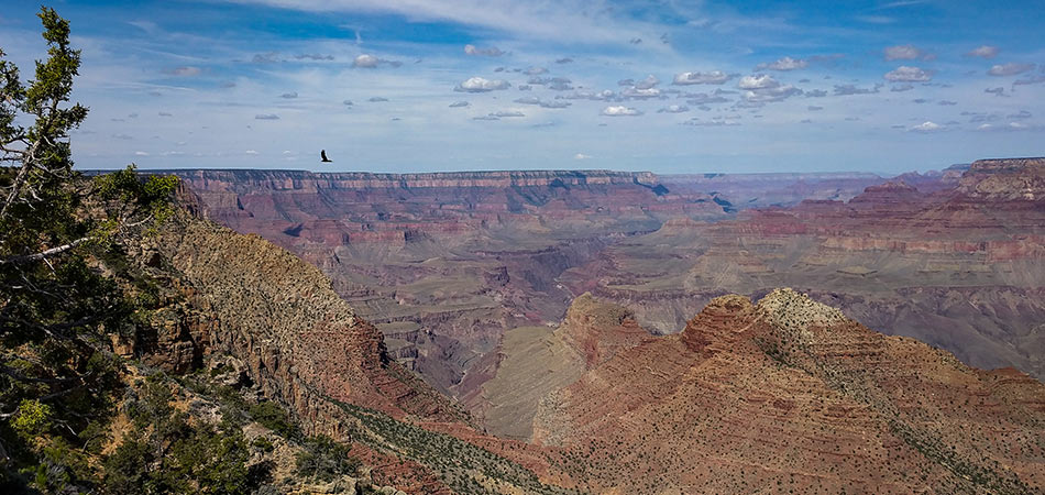 Grand Canyon South Rim with eagle flying on a blue sky day