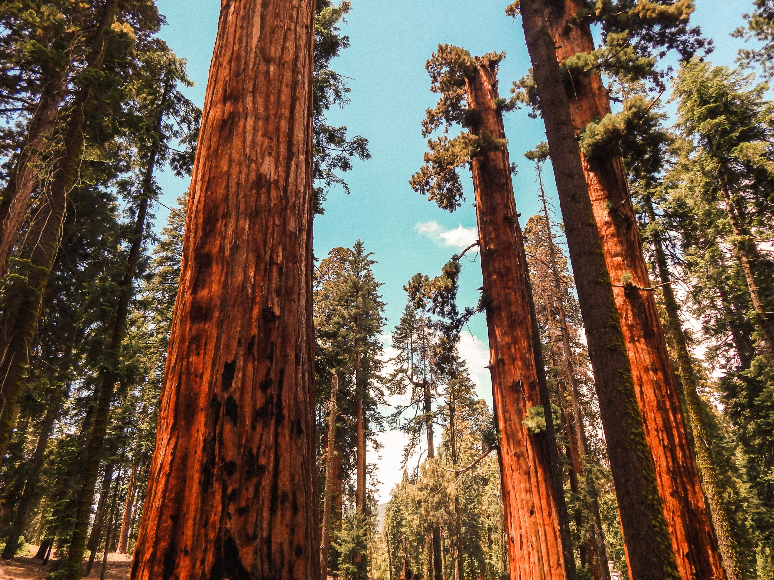 Yosemite 3 Day Camping Tour